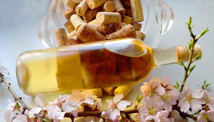 La rueda de los aromas del vino - fase olfativa de la cata de vinos