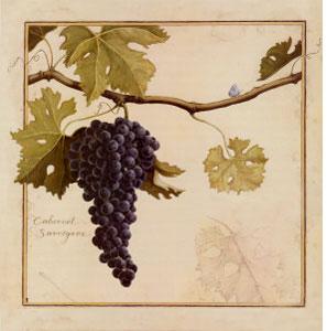 Cabernet Sauvignon: características de la uva y sus vinos - diccionario de uvas para vinos
