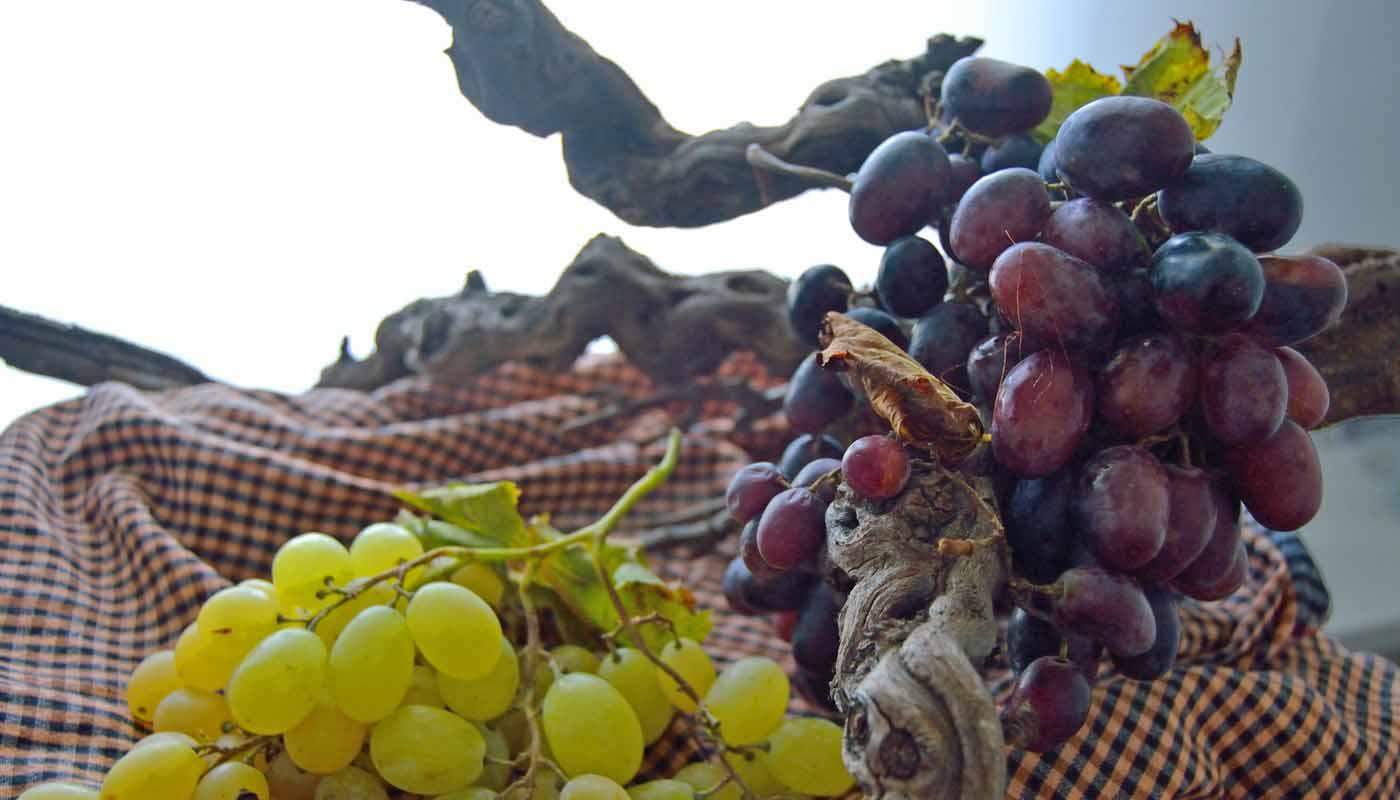 ¿Qué son las denominaciones de origen calificadas de vinos? - figuras de proteccion de vinos