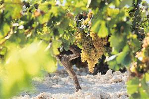 Ruta del vino del Marco de Jerez - vinos de España - enoturismo en Andalucía
