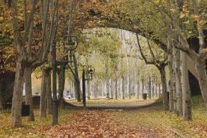 Ruta del vino Ribera del Duero - vinos de España - enoturismo en Catilla Leon