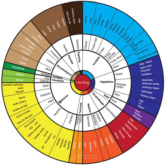 Modelo de rueda de aromas del vino - fase olfativa de la cata de vinos