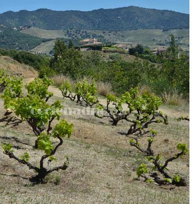 Qué es el terruño o terroir y cómo influye en la calidad de los vinos