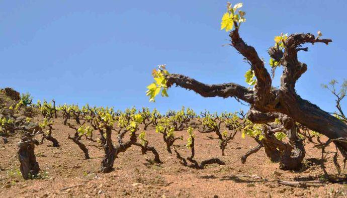 El terruño o terroir y la calidad de los vinos