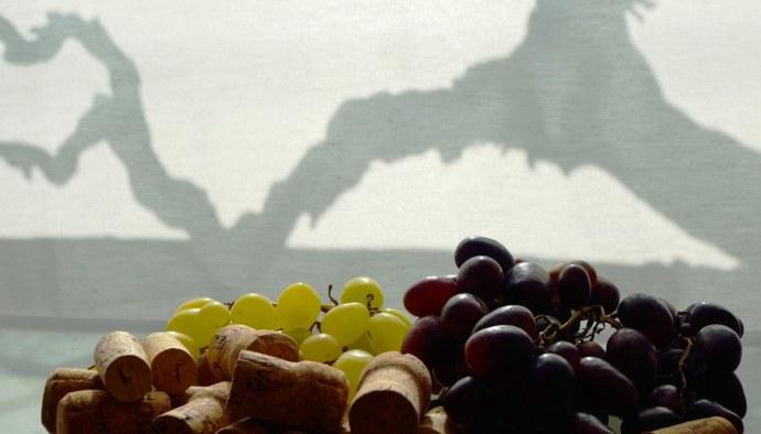 ¿Qué son los vinos de pago? Denominacion vino de pago - figuras de porteccion de vinos