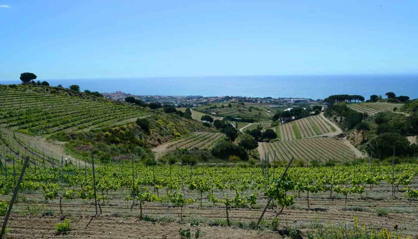 ¿Qué son los vinos de la tierra? VT - figuras de poreteccion de vinos