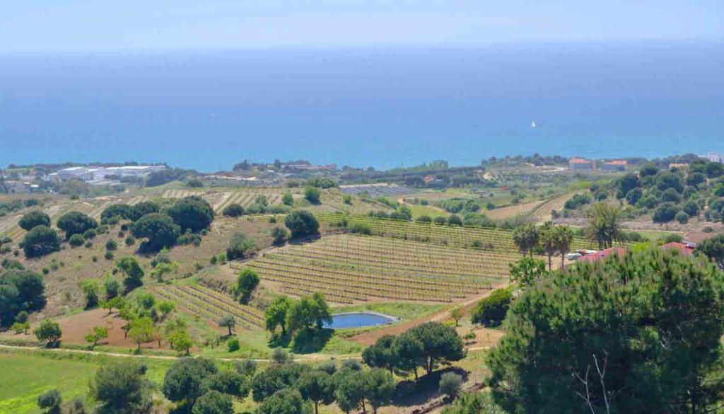 Ruta del vino de Alella, mar y montaña a tocar de Barcelona - enoturismo