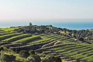 Ruta del vino de Alella - vinos de España - enoturismo en Cataluña