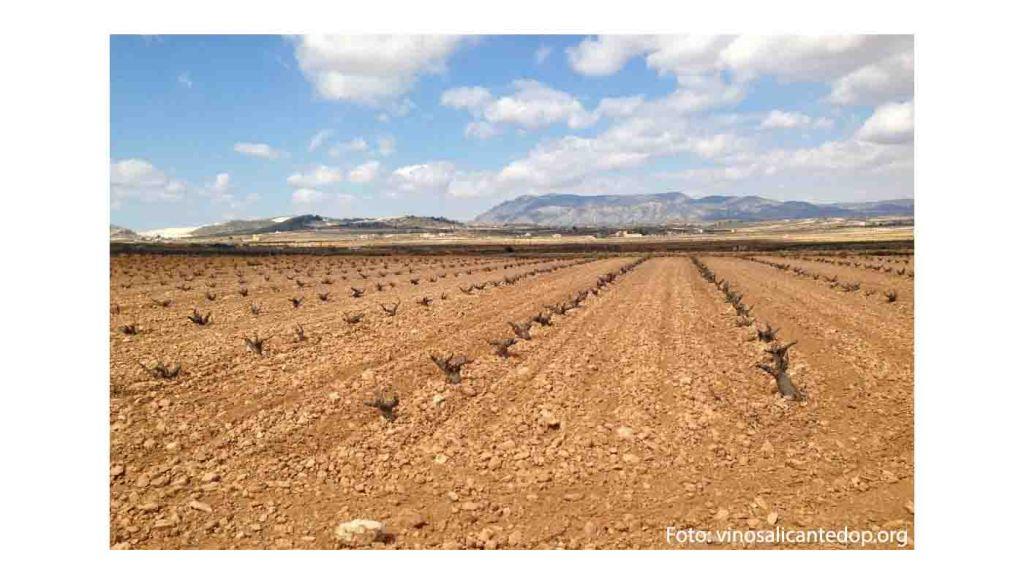 Ruta del vino de Alicante - vinos de España - enoturismo en La Comunidad de Valencia
