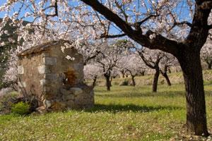 Ruta del vino de Alicante - vinos de España - enoturismo en la Comunidad Valenciana