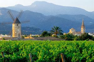 Ruta del vino de Binissalem Mallorca - vinos de España - enoturismo en Islas Baleares