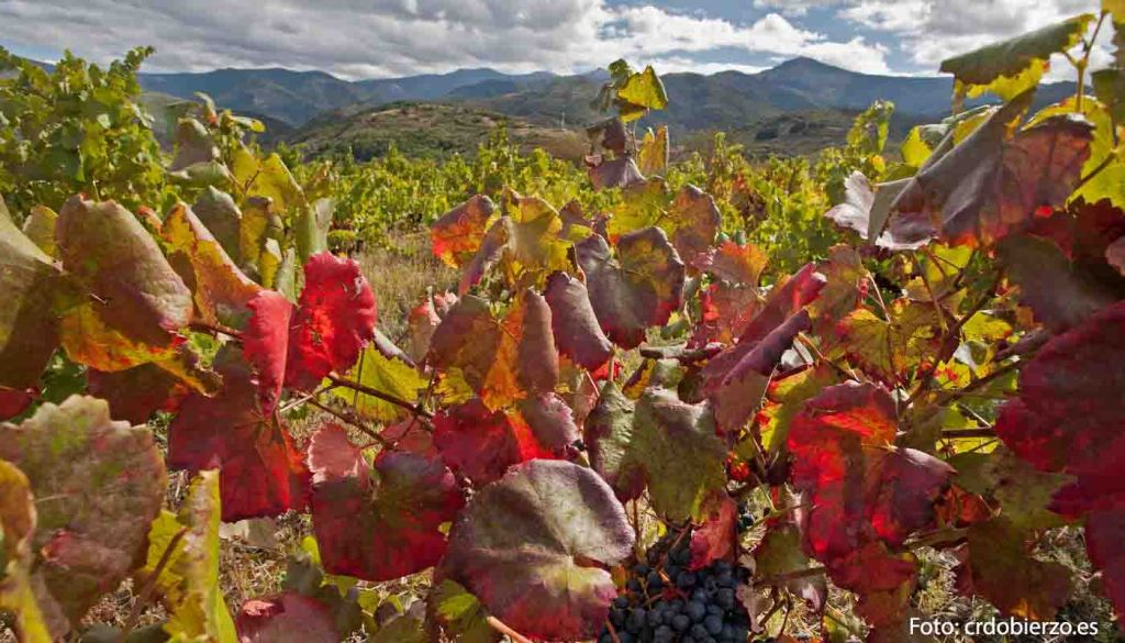 Ruta del vino Bierzo - enoturismo en castilla León - vinos de España