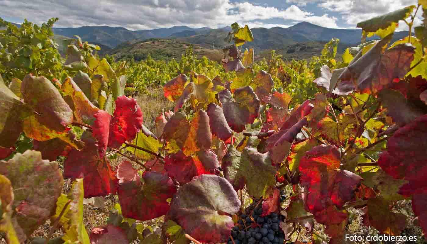 Ruta del vino Bierzo, el medievo dentro del camino de Santiago