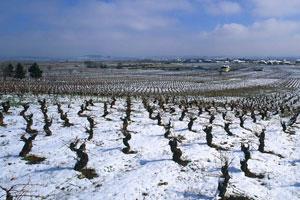 Ruta del vino Bierzo - vinos de España - enoturismo en Catilla Leon