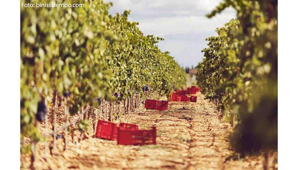 Ruta del vino Binissalem Mallorca - enoturismo en Mallorca e Islas Baleares - vinos de España