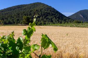 ruta del vino de Bullas - vinos de España - enoturismo en Murcia
