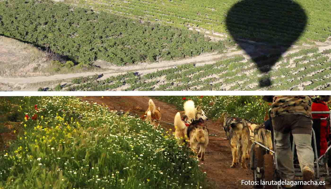 Ruta del vino del Campo de Borja, la ruta de la garnacha - rutas de vinos de España - enoturismo en Aragón
