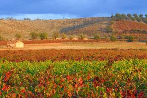 Ruta del vino de Cariñena - vinos de España - enoturismo en Aragón