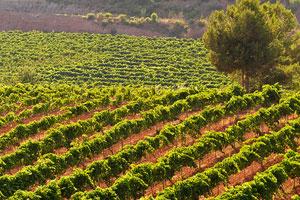 Ruta del vino de Cataluña - vinos de España - enoturismo en Cataluña