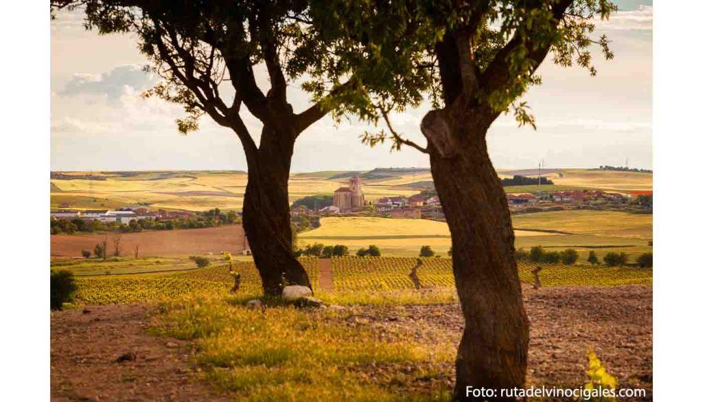 Ruta del vino Cigales - enoturismo en Castilla León - vinos de España