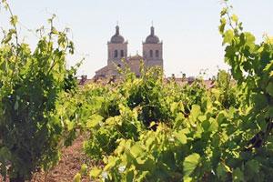 Ruta del vino Cigales - vinos de España - enoturismo en Castilla Leon