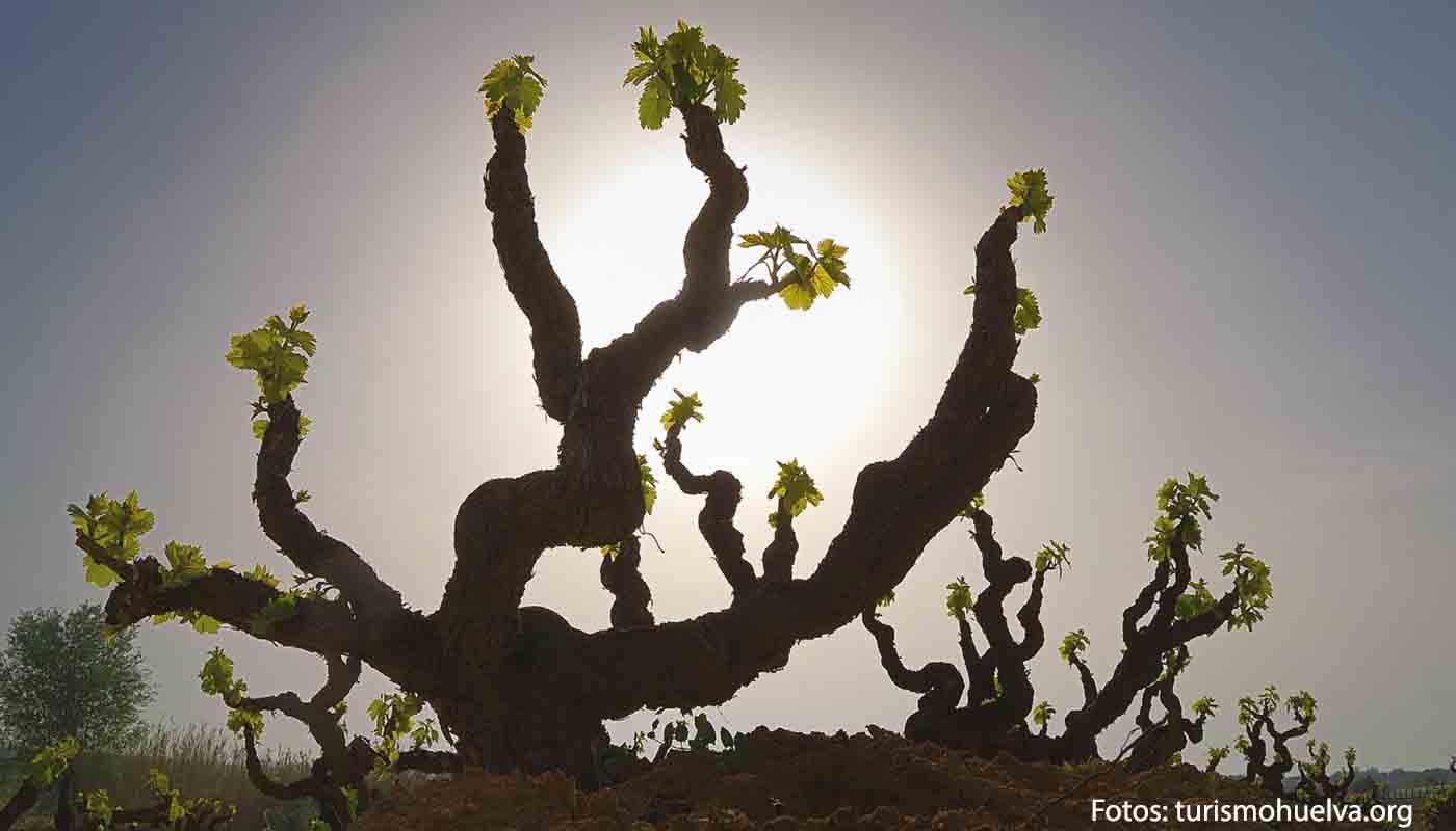 Ruta del vino Condado de Huelva, de los Tartessos a Colón - enoturismo en España: Andalucía