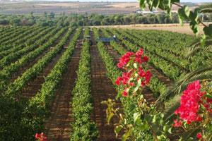 Ruta del vino del Condado de Huelva - vinos de España - enoturismo en Andalucía