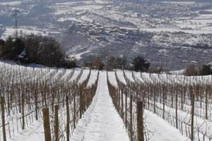 Ruta del vino Costers del Segre - vinos de España - enoturismo en Cataluña