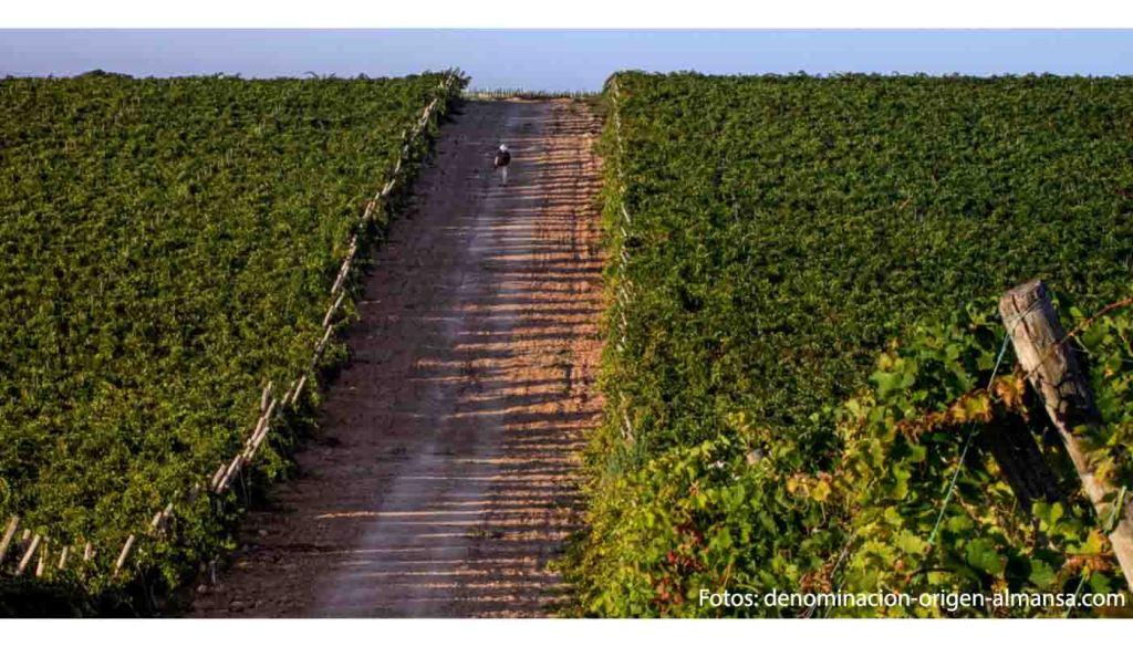 Denominacion de origen Almansa - vinos de España - vinos de Castilla La Mancha