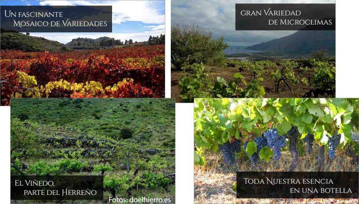 DOP El Hierro: uvas, vinos, bodegas y zona geográfica - vinos de España - vinos de las Islas Canarias