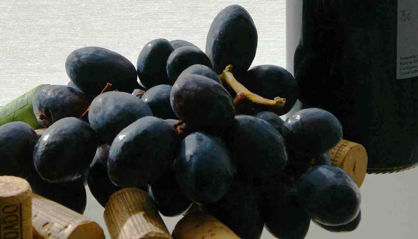 Denominación de origen Méntrida-Toledo: tipos de vinos, uvas y bodegas - vinos de España - vinos de Castilla La Mancha