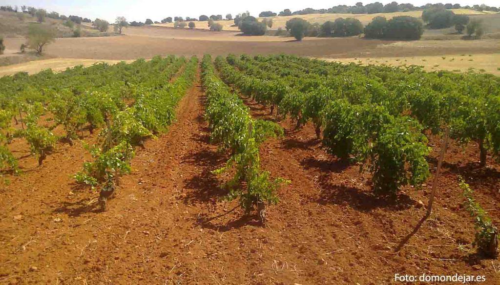 Denominacion de origen Mondéjar - vinos de España - vinos de Castilla La Mancha