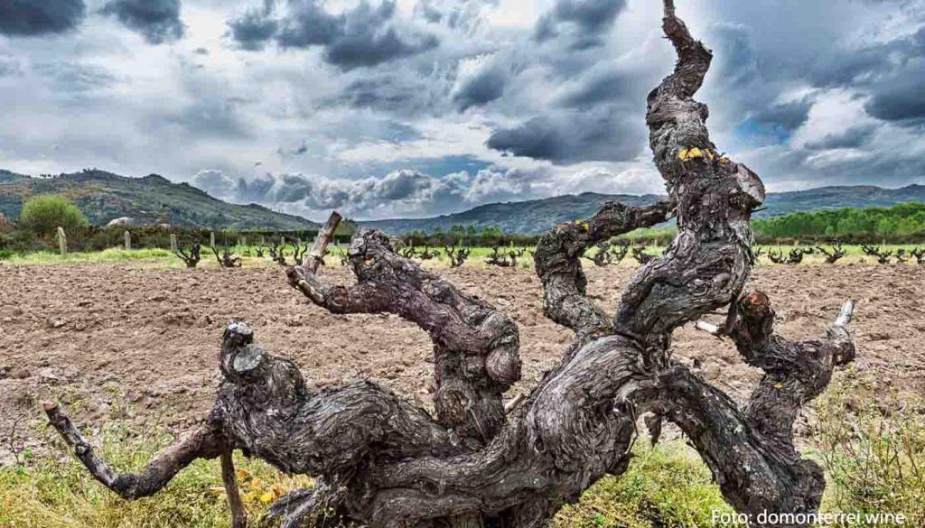 Denominacion de origen Monterrei - vinos de España - vinos de Galicia