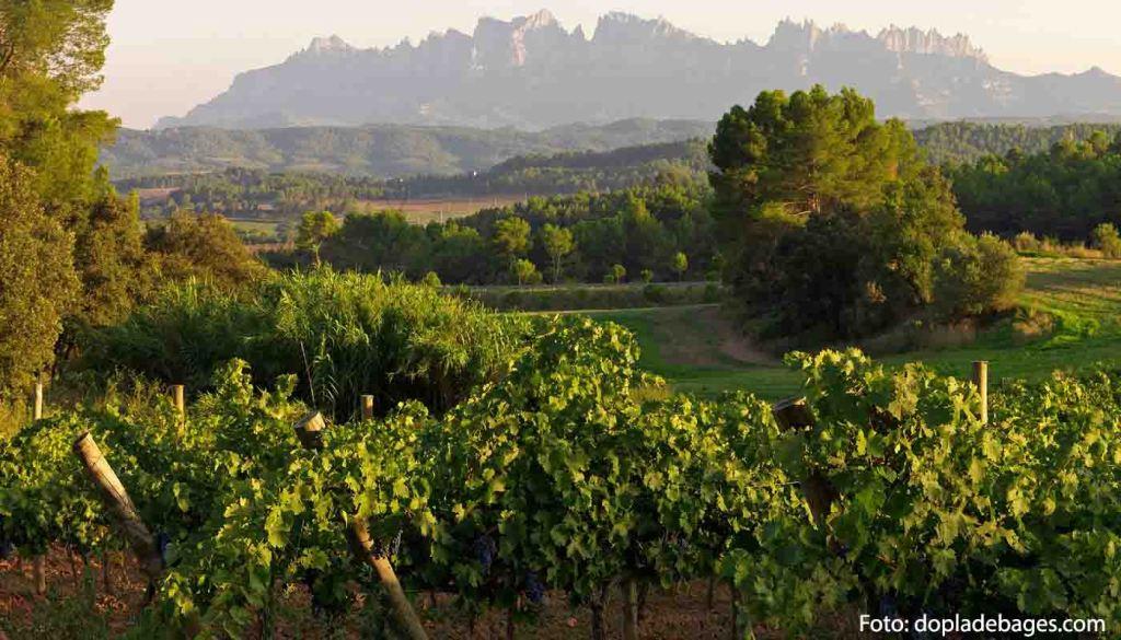 DOP Pla del Bages: uvas, vinos, bodegas y zona geográfica - vinos de España