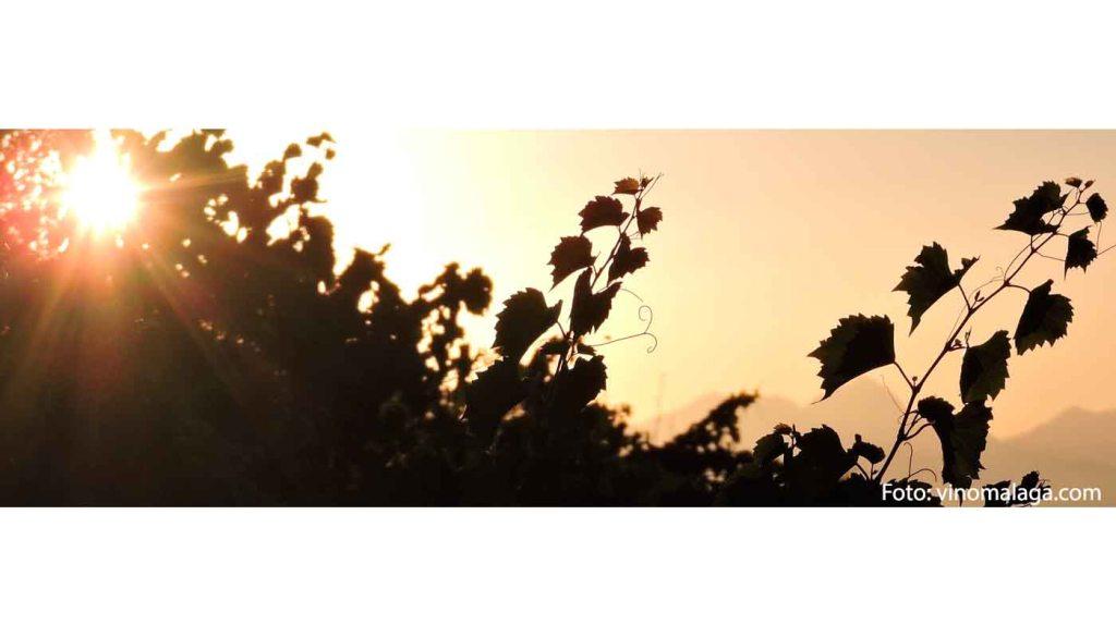 Denominacion de origen Sierras de Málaga - vinos de España - vino de Andalucía