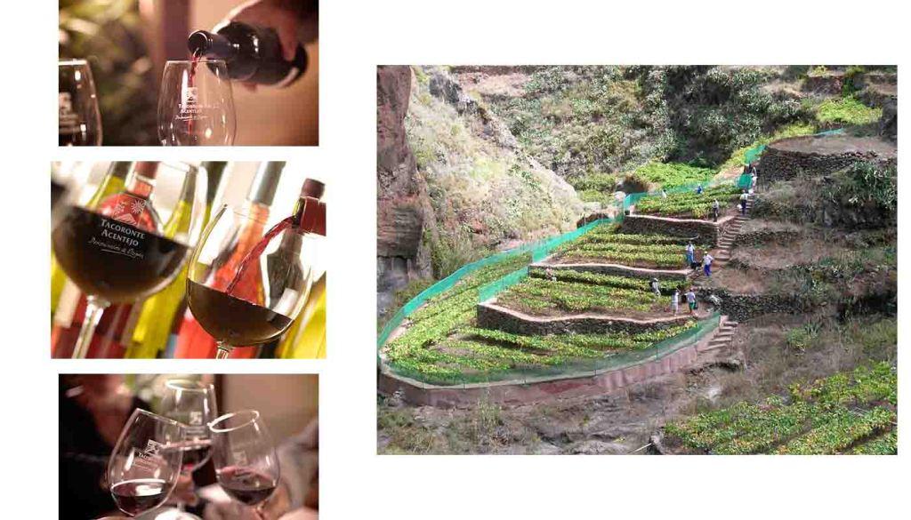 DOP Tacoronte Acentejo, vinos, bodegas y zona geográfica - vinos de España - vinos de las Islas Canarias