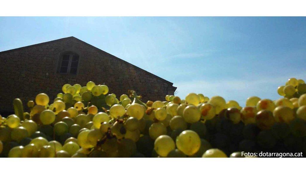 Denominacion de origen Tarragona - vinos de España - vinos de Cataluña