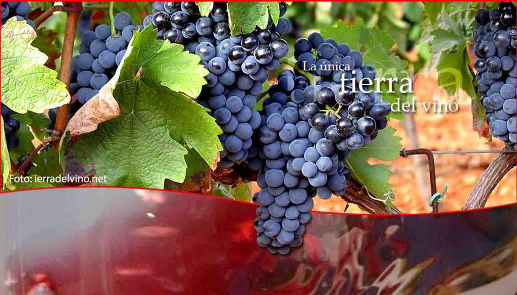 DOP Tierra del Vino de Zamora: uvas, vinos, bodegas y zona geográfica - vinos de España - vinos de Castilla León