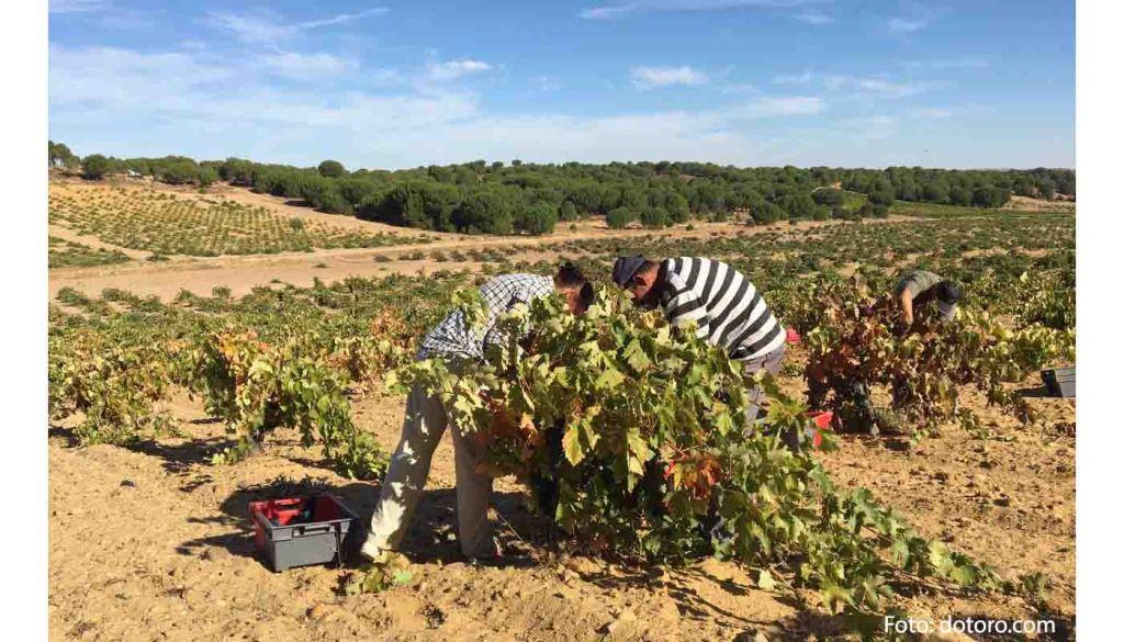 Denominacion de origen Toro - vinos de España - vinos de Castilla Leon