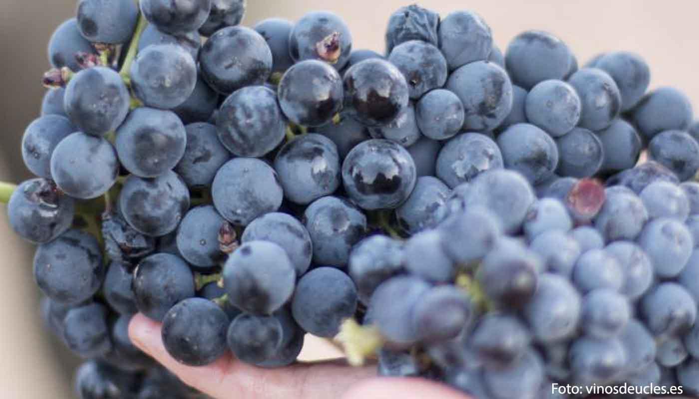 DOP Uclés: uvas, vinos, bodegas y zona geográfica - vinos de España - vinos de Castilla La Mancha