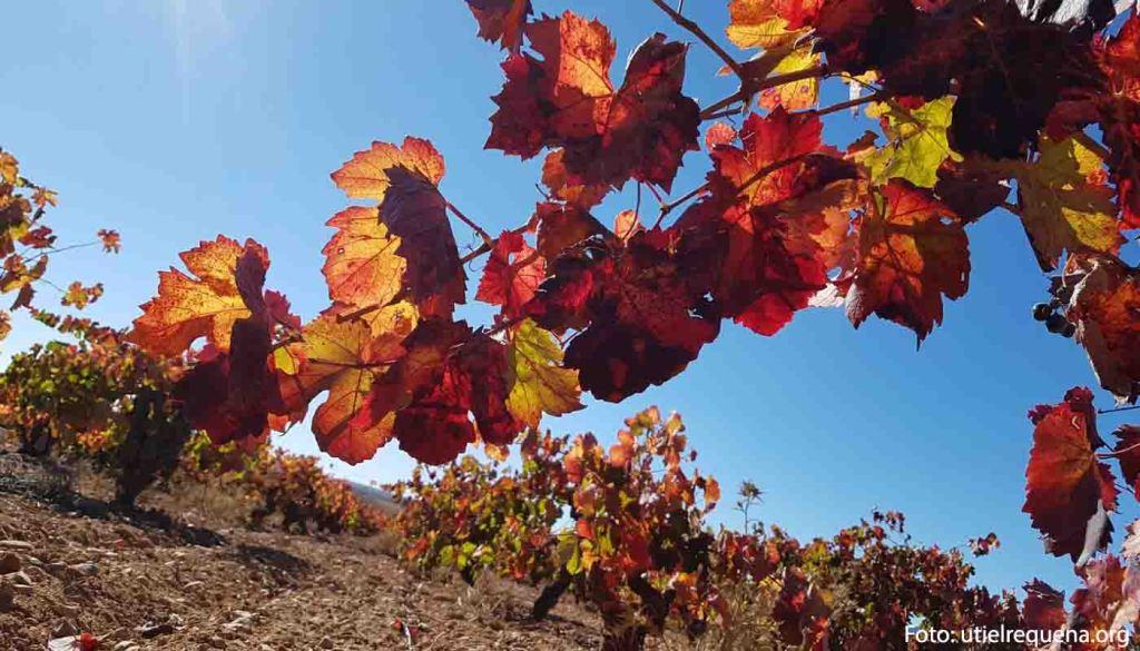 Denominacion de origen Utiel Requena - vinos de España - vinos de la Comunidad Valenciana