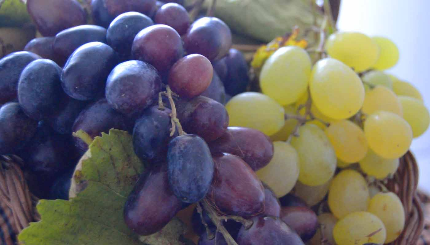 Denominación de origen Valencia: uvas, vinos, marco geográfico y bodegas - vinos de España - vinos de la Comunidad Valenciana