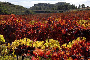 Ruta del vino de EL Hierro - vinos de España - enoturismo en las Islas Canarias