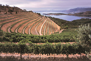 Ruta del vino del Emporda - vinos de España - enoturismo en Cataluña