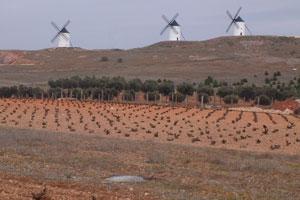 Ruta del vino de La Mancha - vinos de España - enoturismo en Castilla La Mancha