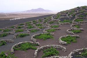 Ruta del vino de Lanzarote - vinos de España - enoturismo en las Islas Canarias