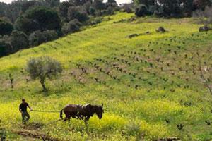 Ruta del vino de Madrid - vinos de España - enoturismo en Madrid
