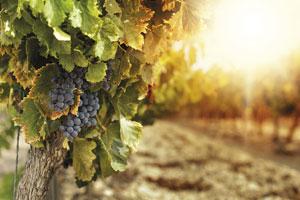 Ruta del vino de La Manchuela - vinos de España - enoturismo en Castilla La Mancha
