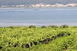 Ruta del vino Rias Baixas - vinos de España - enoturismo en Galicia