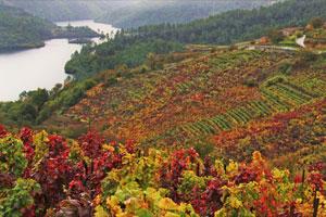Ruta del vino Ribeira Sacra - vinos de España - enoturismo en Galicia
